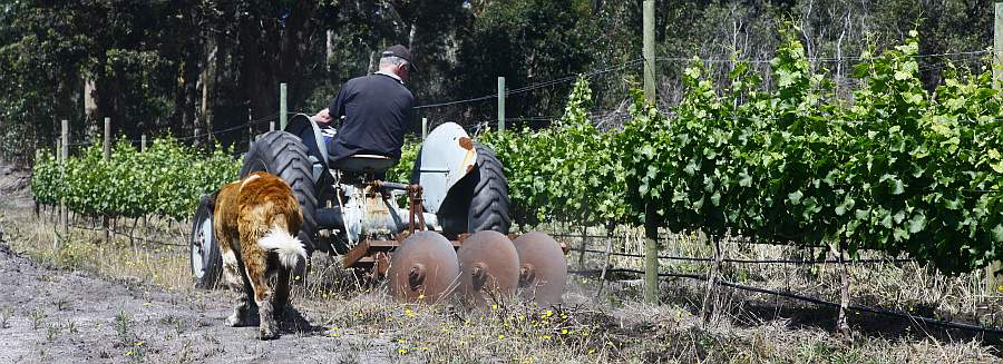 Jd wines n a p i e r overberg western cape south for Grand jardin wine